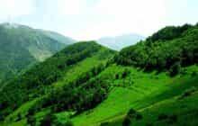قطع ۲۳ هزار اصله درخت جنگلی در قره داغ توسط مس سونگون