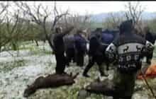 سیل و تگرگ به ۲۷ روستای اهر خسارت زد