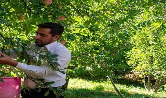 برند جهانی سیب زنوز در مسیر فراموشی