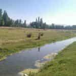 اداره آب و فاضلاب و شهرداری اهر اخطاریه کتبی زیست محیطی گرفتند