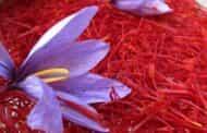 محصول زعفران آذربایجان شرقی تحت پوشش بیمه محصولات کشاورزی قرار گرفت